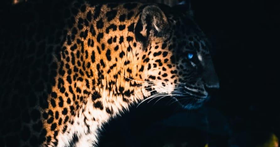 Yggdrasil se asocia con ReelPlay para lanzar los Jaguar SuperWays de Bad Dingo